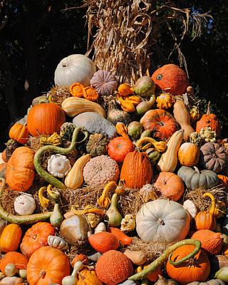 Photograph - Autumn Harvest by Jai Johnson