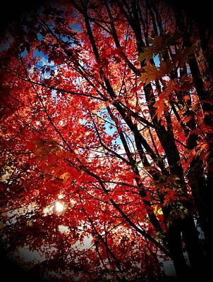 Autumn Hymn Art Print by Anna Bree