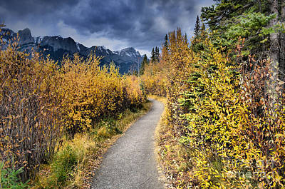 Photograph - Autumn In Alberta by Tara Turner