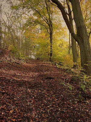 Autumn In Brantingham Woods Art Print