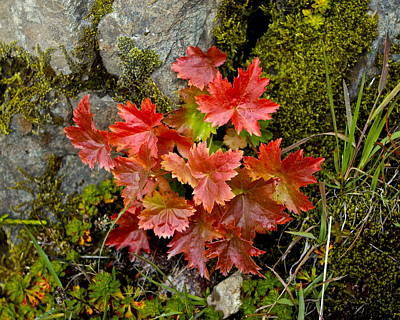 Photograph - Autumn In Canada by Sylvia Hart
