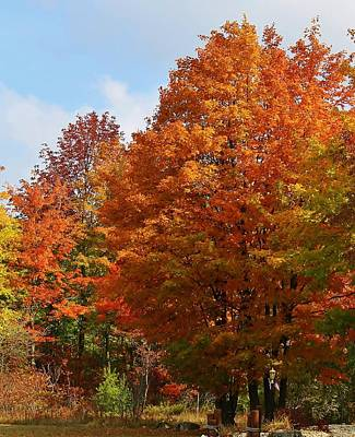 Photograph - Autumn In Door County by Bruce Bley