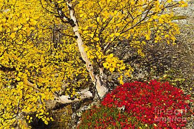 Landscape Photograph - Autumn In Finland by Heiko Koehrer-Wagner