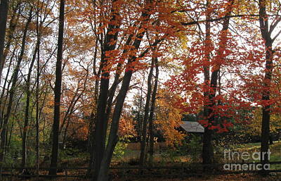 Photograph - Autumn In Mauricetown by Nancy Patterson