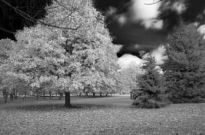 Photograph - Autumn In Niagara by Guy Whiteley