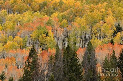 Abstract Animalia - Autumn in Northern Utah by Dennis Hammer
