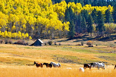 Photograph - Autumn In Pagosa by Johanne Peale