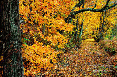 Photograph - Autumn In Tennessee by Cheryl Davis
