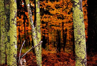 Upper Peninsula Photograph - Autumn In The Forest by Matthew Winn