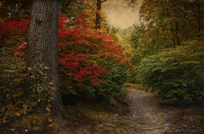 Photograph - Autumn In The Woodland by Robin-Lee Vieira