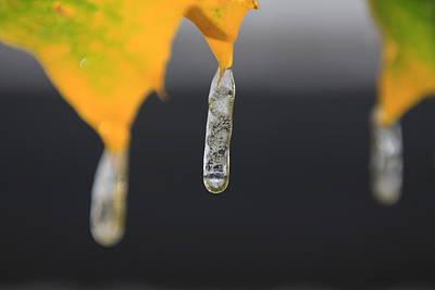 Autumn Jewels Original