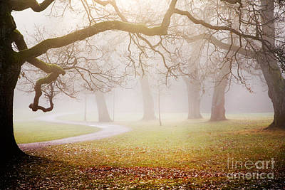 Photograph - Autumn by Kati Molin