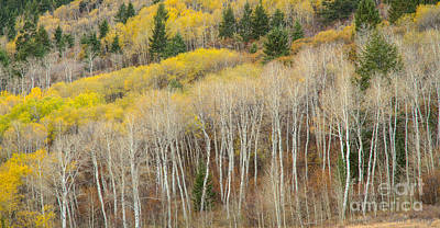 Photograph - Autumn Layers by Idaho Scenic Images Linda Lantzy