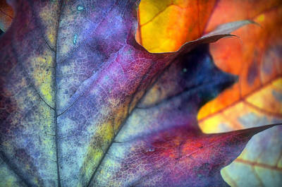 Photograph - Autumn Leaf Abstract 2 by Tara Turner