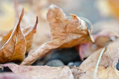 Autumn Leaf Abstract Art Print