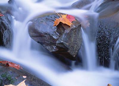 Photograph - Autumn Leaf On Boulder, Little River by Tim Fitzharris