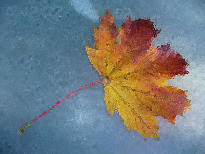 Photograph - Autumn Leaf Under Glass by Margie Avellino