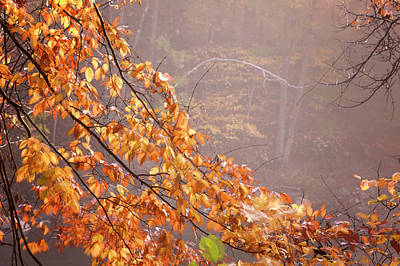 Print featuring the photograph Autumn Leaves And Fog by Tom Singleton