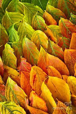 Photograph - Autumn Leaves Arrangement by Elena Elisseeva