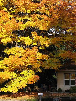 Photograph - Autumn Leaves by Chris Anderson