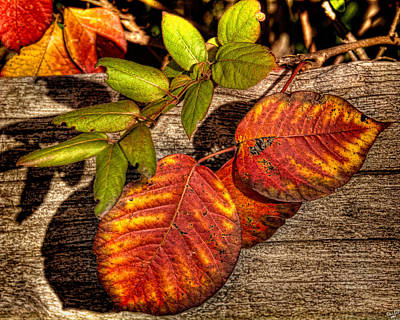 Photograph - Autumn Leaves by Chris Lord