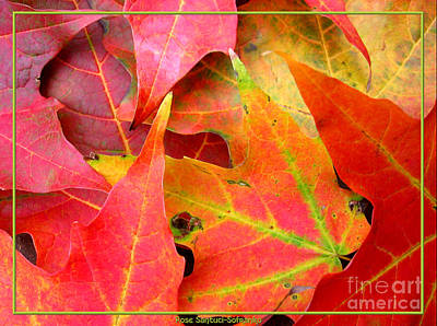 Photograph - Autumn Leaves Closeup by Rose Santuci-Sofranko
