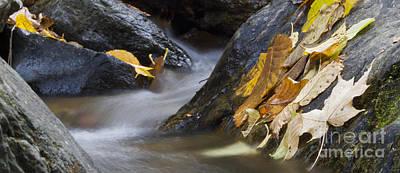 Shenandoah National Park Photograph - Autumn Leaves  by Dustin K Ryan
