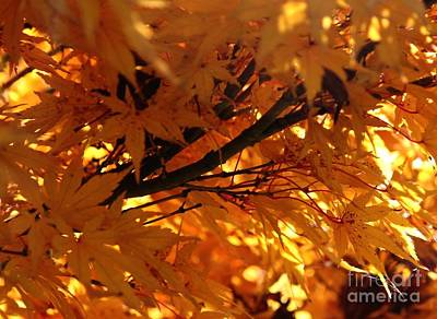 Photograph - Autumn Leaves by Erica Hanel