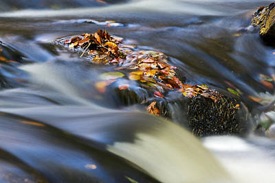 Fathers Day 1 - Autumn Leaves In Water by David Pringle