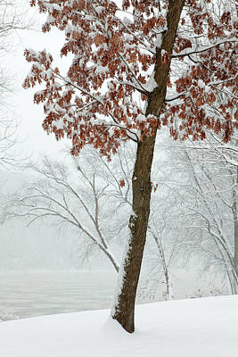 Photograph - Autumn Leaves In Winter Snow Storm by John Stephens