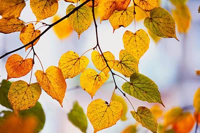 Autumn Leaves Print by Jenny Rainbow