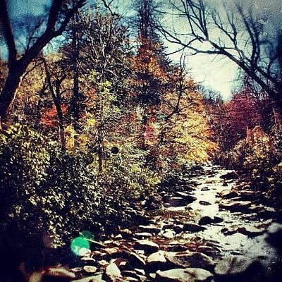 Mountain Wall Art - Photograph - Autumn Leaves by Joel Lopez