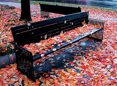 Photograph - Autumn  Leaves, Washington, D.c. by John Pagliuca