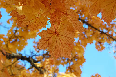 Photograph - Autumn Leaves by Margaret Pitcher
