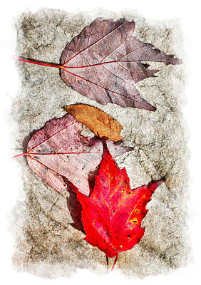 Autumn Leaves On A Rock II Art Print by Dan Carmichael
