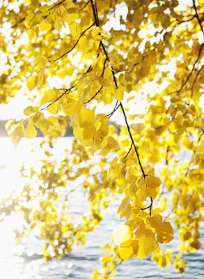 Autumn Leaves On Branch With Lake In Background, Close-up Art Print by Johner Images