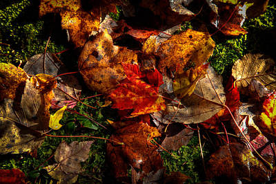 Autumn Photograph - Autumn Leaves On The Moss by David Patterson