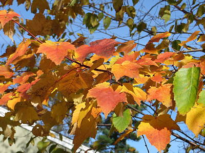 Autumn Leaves Print by Pamela Turner