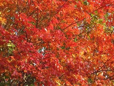 Autumn Leaves Art Print by Shawn Hughes