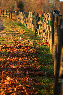 Photograph - Autumn Light by Emanuel Tanjala