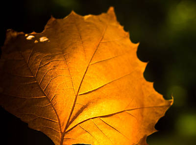 Photograph - Autumn Light by Sara Frank