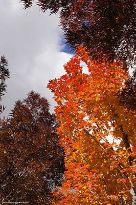 Art Print featuring the photograph Autumn Looking Up by Mick Anderson