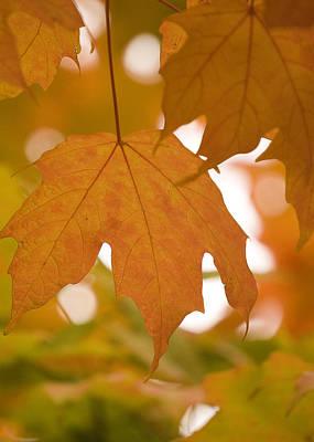 Art Print featuring the photograph Autumn Maple Leaf  by Lisa Missenda
