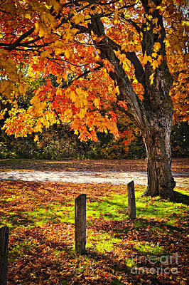 Wooden Fence Post Photograph - Autumn Maple Tree Near Road by Elena Elisseeva