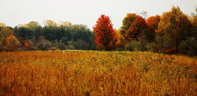 Photograph - Autumn Meadow by Scott Hovind