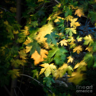 Photograph - Autumn Movement I. by Alexander Kunz