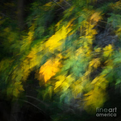 Photograph - Autumn Movement II. by Alexander Kunz