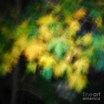 Photograph - Autumn Movement IIi. by Alexander Kunz