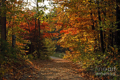 Autumn Nature Trail Print by Cheryl Cencich