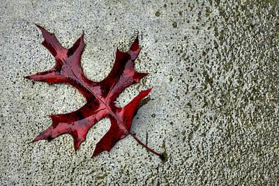 Autumn Oak Leaf On Rainy Day Art Print
